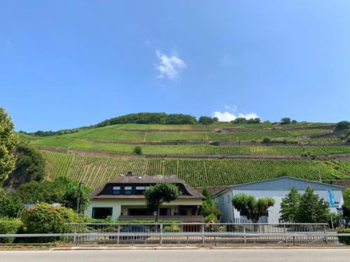 Weinberge in Rüdesheim am Rhein...